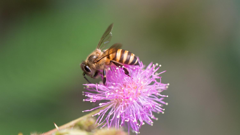 Memotret Lebah